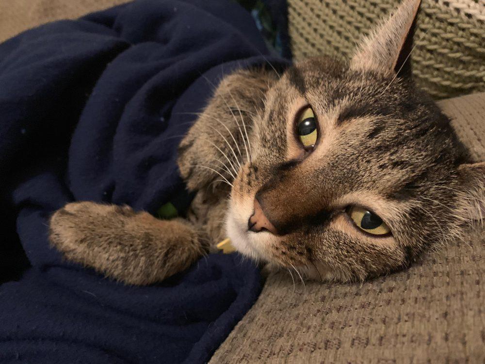 2019 Cutest Pets Photo Contest - Idaho For Pet's Sake